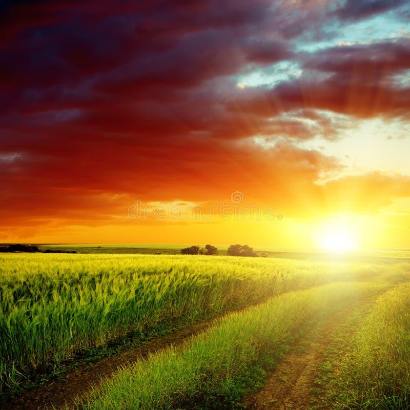 puesta del sol roja sobre el camino en campo verde imagen de archivo
