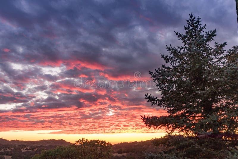 Puesta del sol rosada, anaranjada, amarilla y de la lavanda vibrante, lanscape rural, árbol de pino grande, cielo de la puesta de fotografía de archivo libre de regalías