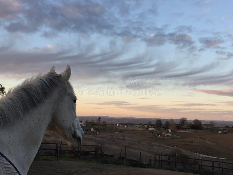 Puesta del sol rosada del cielo que sorprende con el caballo que lleva una manta negra libre illustration