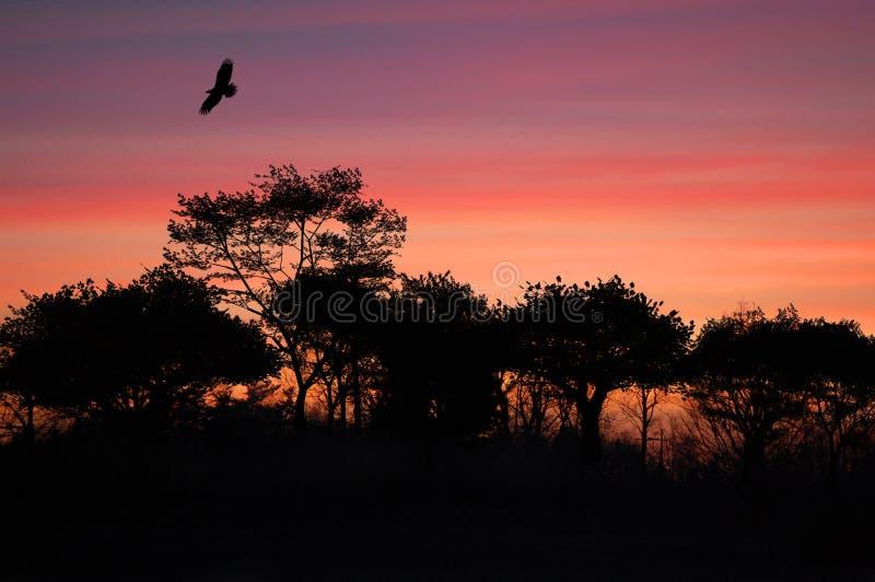 Puesta del sol rosada con el árbol y un pájaro fotos de archivo libres de regalías
