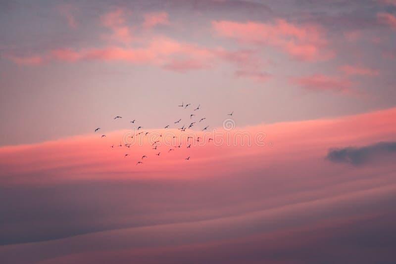 Puesta del sol rosada hermosa foto de archivo libre de regalías