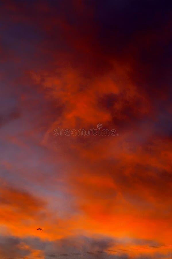Puesta del sol sangrienta del invierno fotos de archivo