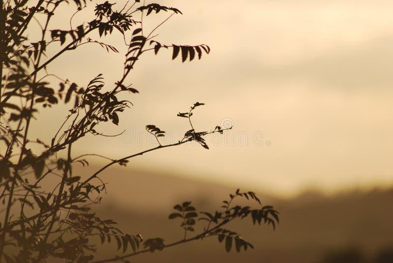 Puesta del sol sobre árbol solo hermoso foto de archivo libre de regalías