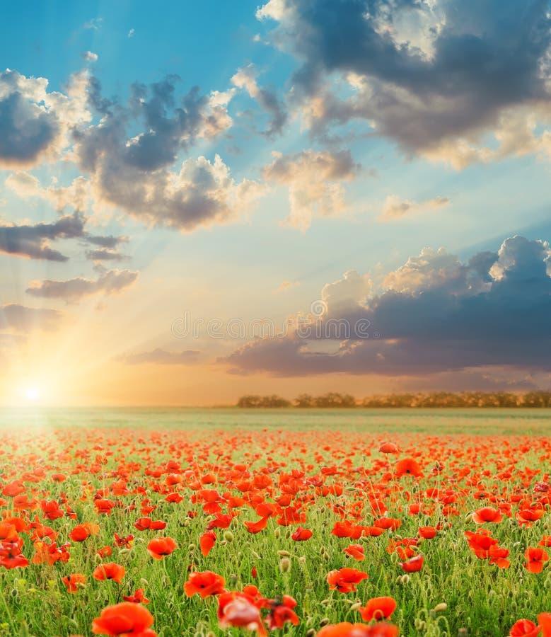 Puesta del sol sobre campo con las amapolas fotografía de archivo libre de regalías