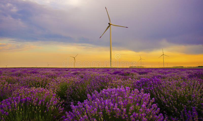 Puesta del sol sobre campo de la lavanda con la turbina de viento imagen de archivo libre de regalías