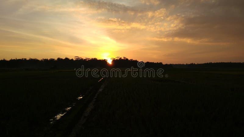 puesta del sol sobre campos del arroz fotografía de archivo libre de regalías