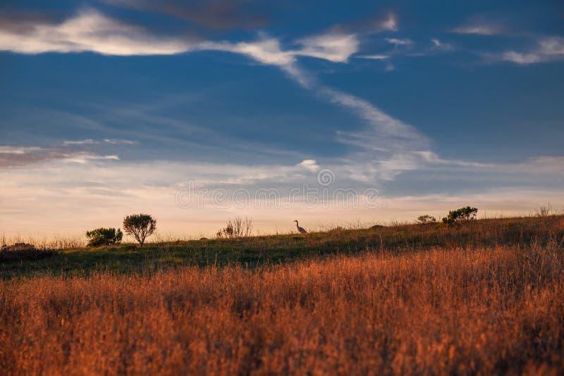 Puesta del sol sobre el campo con la silueta del pájaro en un horizonte imagen de archivo libre de regalías