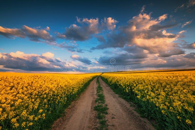 Puesta del sol sobre el campo de la rabina, d?a de primavera hermoso Camino rural foto de archivo