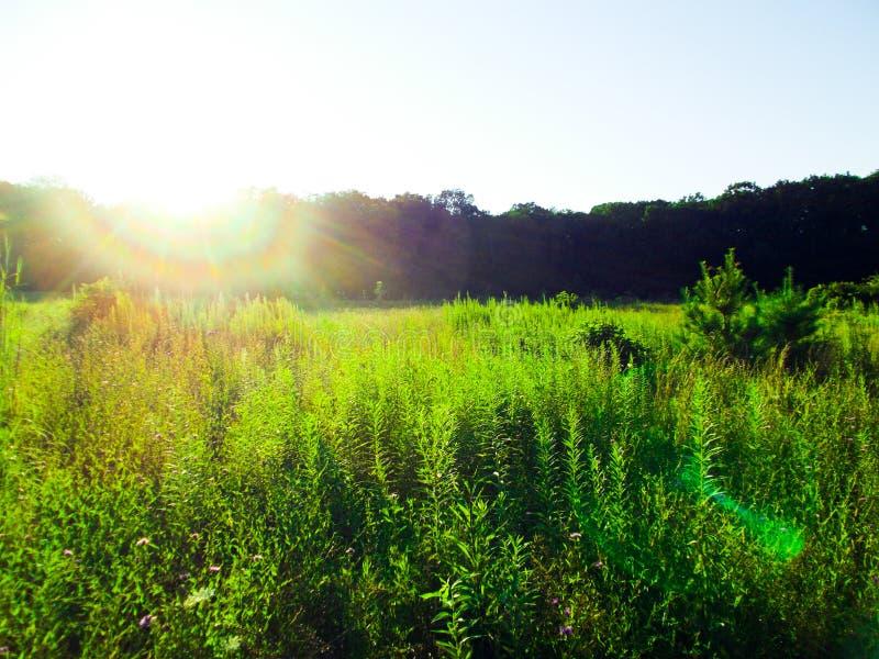 Puesta del sol sobre el lado de un prado imagen de archivo libre de regalías