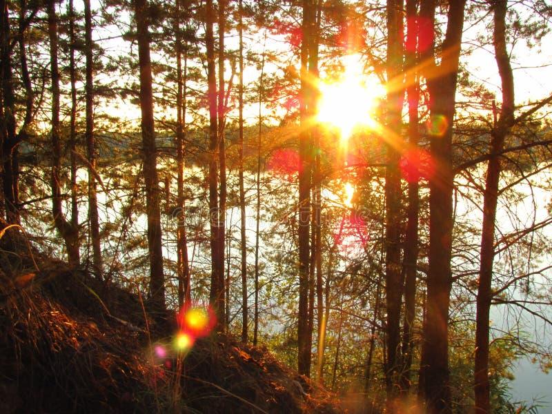 Puesta del sol sobre el lago con los pinos imagen de archivo libre de regalías