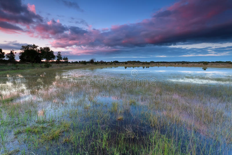 Puesta del sol sobre el lago salvaje después de la lluvia imagen de archivo libre de regalías