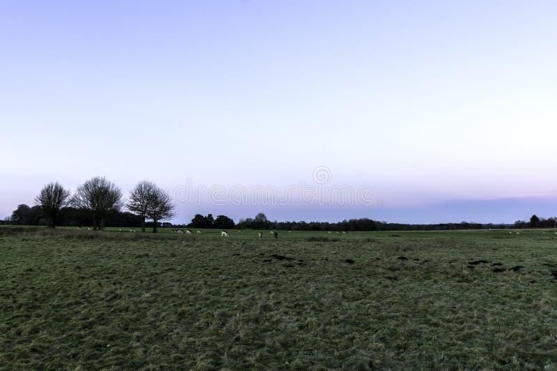 Puesta del sol sobre el parque de Tatton con la manada de los ciervos en fondo - jardines del parque de Tatton imagenes de archivo
