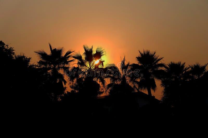 Puesta del sol sobre el top de una palmera imágenes de archivo libres de regalías