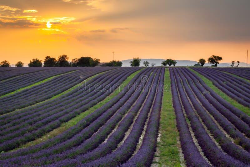 Puesta del sol sobre filas de la lavanda cerca de Valensole, Provence, Francia foto de archivo libre de regalías