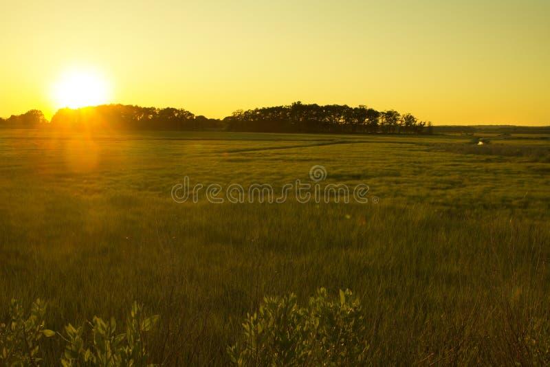 Puesta del sol sobre hierbas del pantano, punto de Meigs, playa de Hammonasset, Madis fotos de archivo libres de regalías
