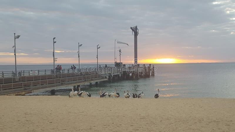 Puesta del sol sobre la bahía de Moreton en el centro turístico isleño de Tangalooma, Queensland Australia fotos de archivo libres de regalías