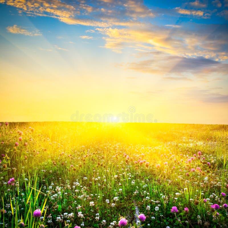 Puesta del sol sobre las flores foto de archivo