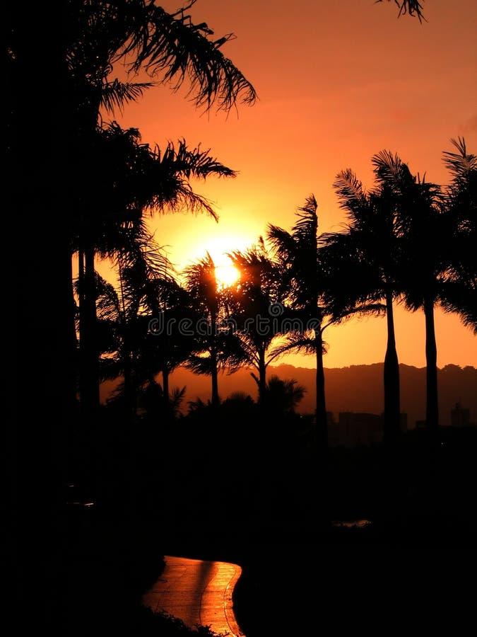 Puesta del sol sobre las palmeras imagen de archivo