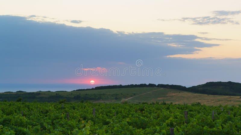Puesta del sol sobre los vi?edos Tarde del verano en el distrito de Anapa de la región de Krasnodar imagen de archivo