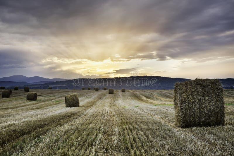 Puesta del sol sobre un campo con las balas de paja del trigo imagen de archivo libre de regalías