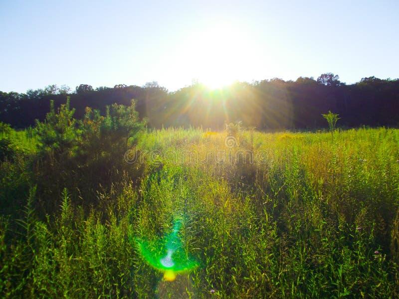 Puesta del sol sobre un prado con instinto de la lente fotos de archivo