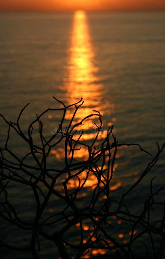 Puesta del sol sola foto de archivo libre de regalías
