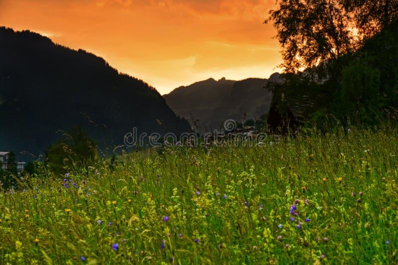 Puesta del sol suiza del prado del verano de las montañas foto de archivo