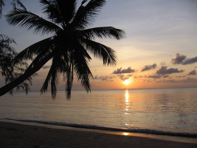 Puesta del sol tailandesa con la palma fotos de archivo