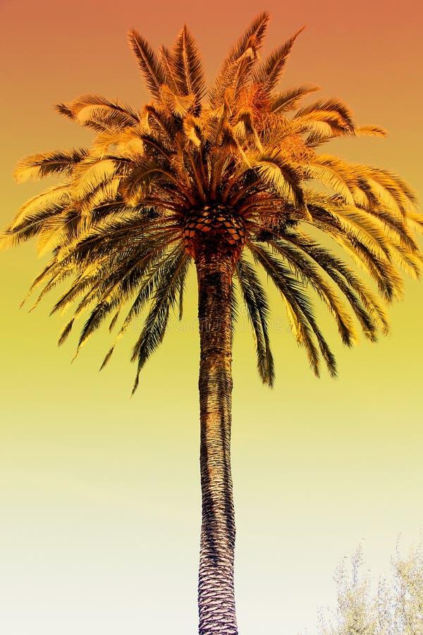 Puesta del sol del tono naranja de la palmera imágenes de archivo libres de regalías