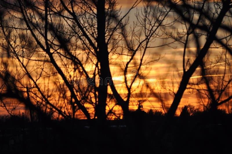 Puesta del sol a través de árboles fotos de archivo