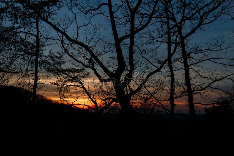 Puesta del sol a través de los árboles fotos de archivo