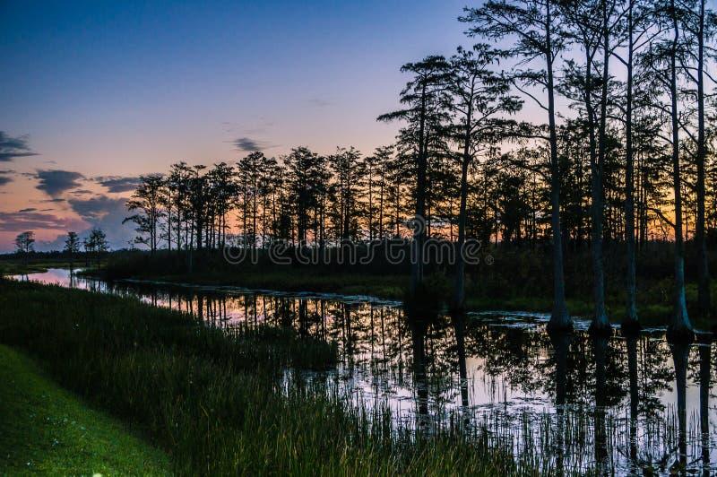 Puesta del sol a través de los árboles de los pantanos foto de archivo