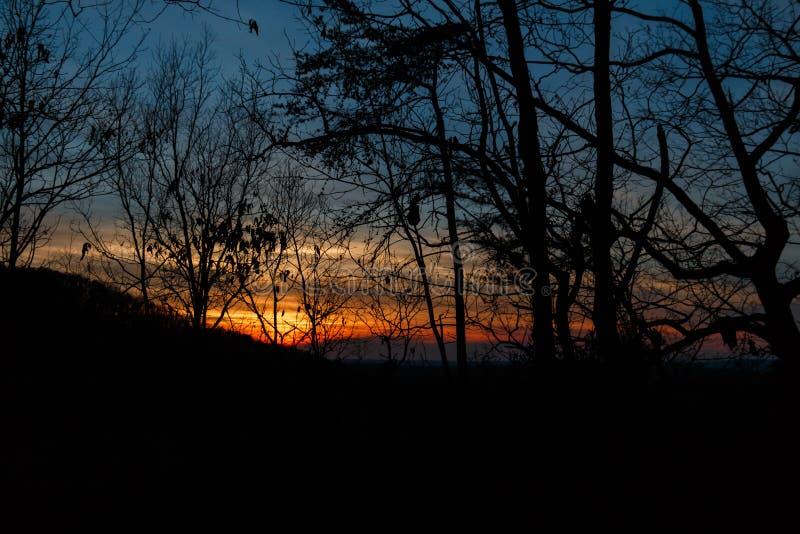 Puesta del sol a través de los árboles y de las ramas fotos de archivo libres de regalías