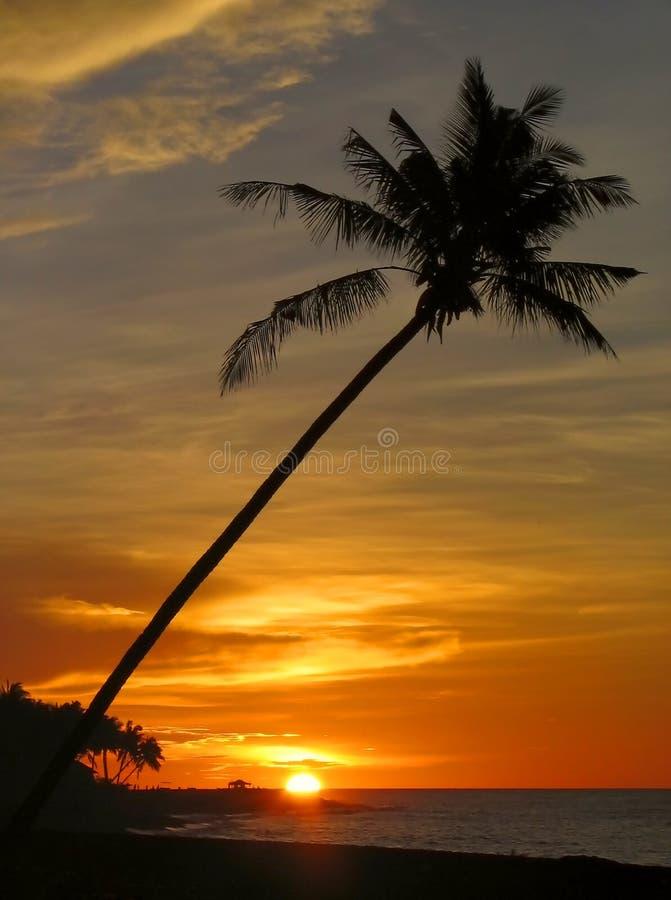 Puesta del sol tropical con la palmera.