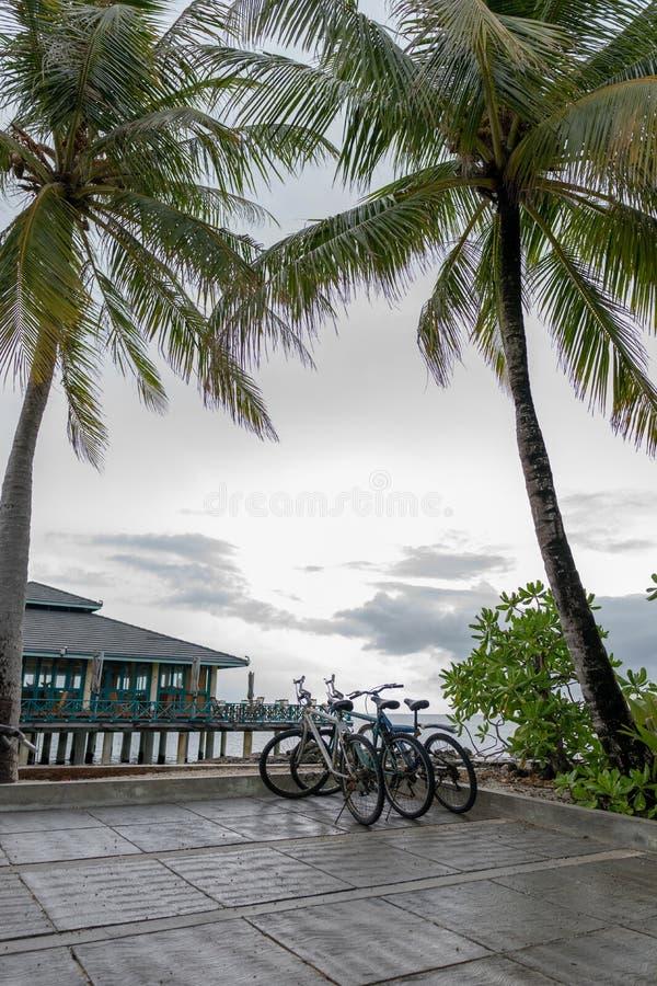 Puesta del sol tropical con las palmeras y la bicicleta en la playa, panorama vertical imagenes de archivo