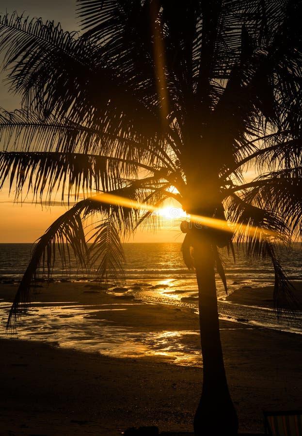 Puesta del sol tropical de la palmera imagen de archivo
