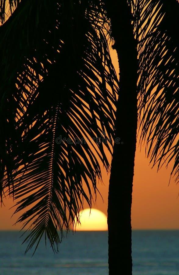 Puesta del sol tropical de la palmera en Hawaii imágenes de archivo libres de regalías