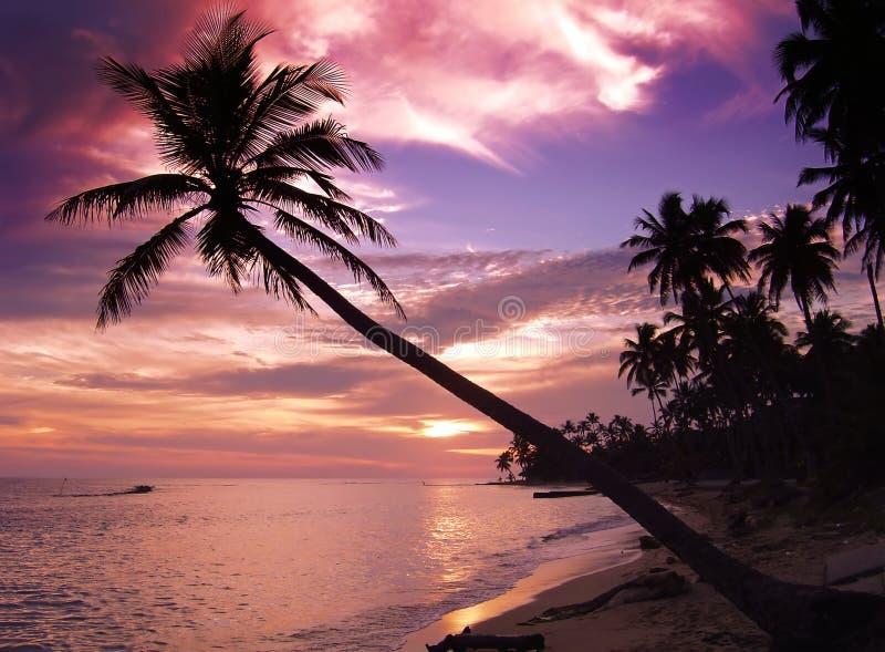 Puesta del sol tropical hermosa foto de archivo