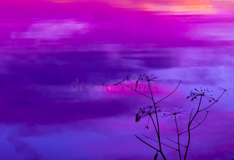 Puesta del sol ultravioleta en el lago con las malas hierbas secadas