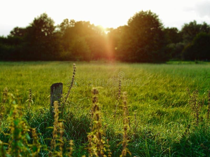 Puesta del sol del verano de Planty fotografía de archivo libre de regalías