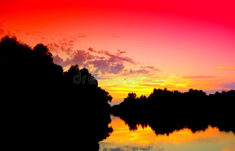 Puesta del sol viva del delta de Danubio fotos de archivo