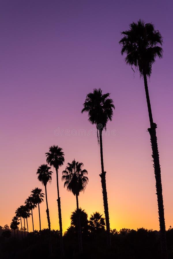 Puesta del sol viva hermosa con la silueta de palmeras foto de archivo
