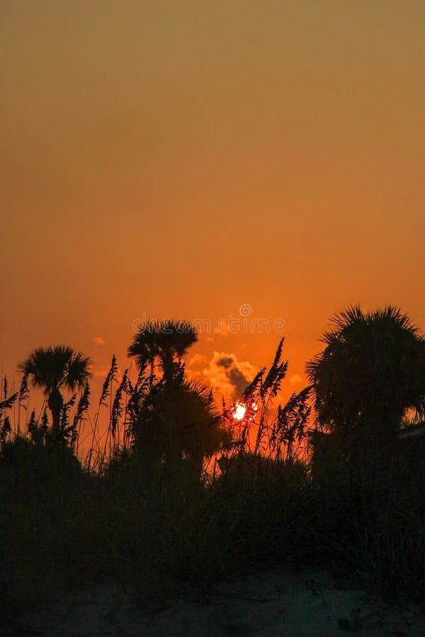 Puesta del sol viva a través de las palmeras y de la avena del mar fotografía de archivo