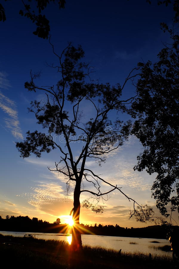 Puesta del sol y árbol imagenes de archivo