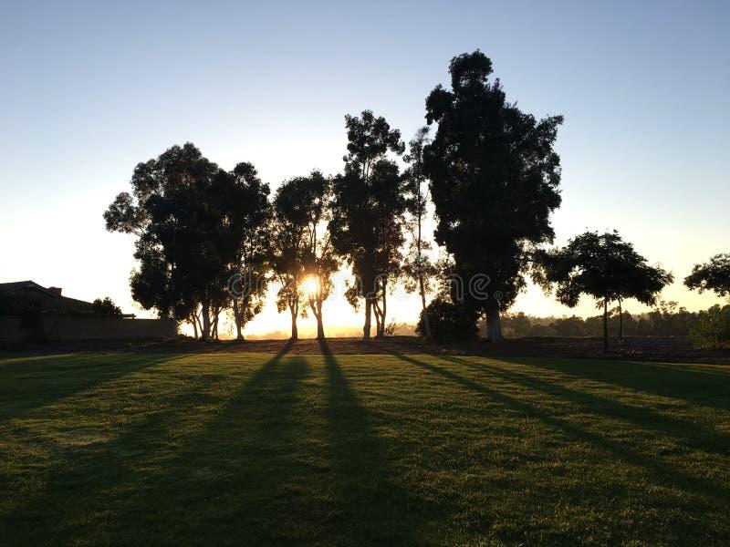Puesta del sol y árboles en San Diego foto de archivo