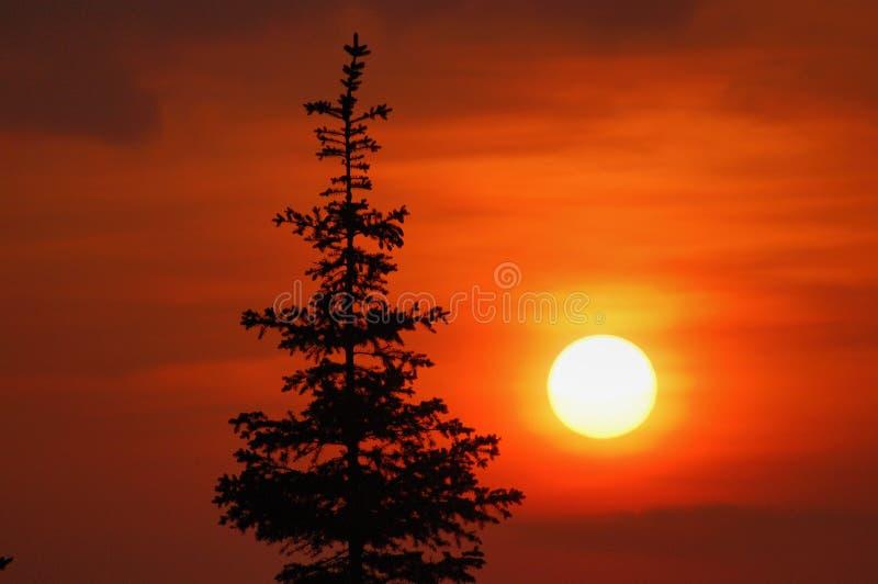 Puesta del sol y abeto fotografía de archivo