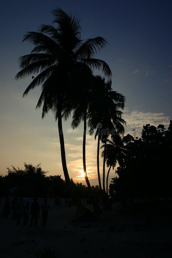 Puesta del sol y palmas fotografía de archivo libre de regalías