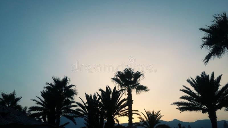 Puesta del sol y palmeras foto de archivo libre de regalías