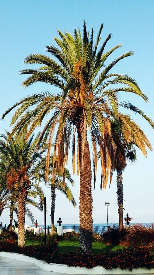 Puesta del sol y palmeras fotos de archivo