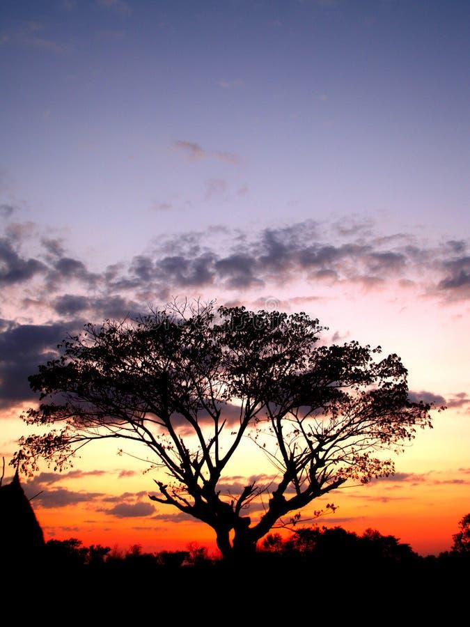 Puesta del sol y sihouette 01 del árbol foto de archivo